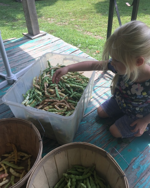 Miss Della helps by sorting green beans from yellow