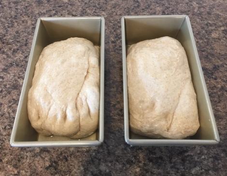 Dough pressed down for second rising